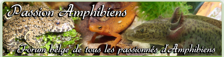 Passion Amphibiens Index du Forum