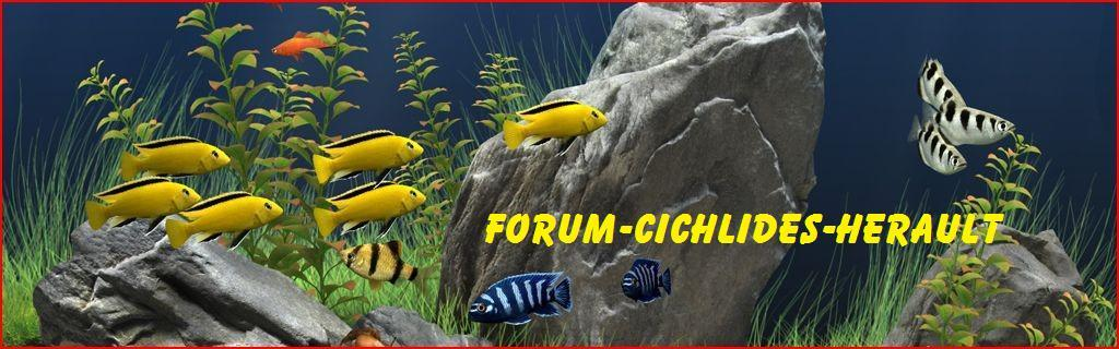 Forum-cichlides-herault Forum Index