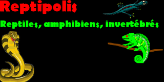 reptipolis Index du Forum