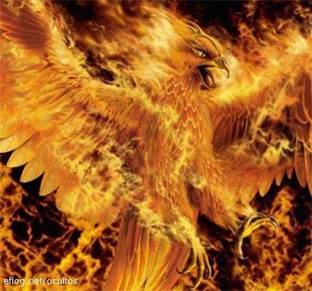 le gang des phoenix forum Index du Forum