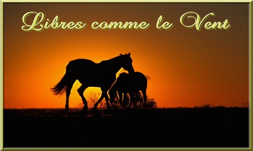 Libres comme le Vent Index du Forum