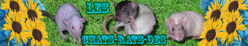 les chat-rat-des Forum Index
