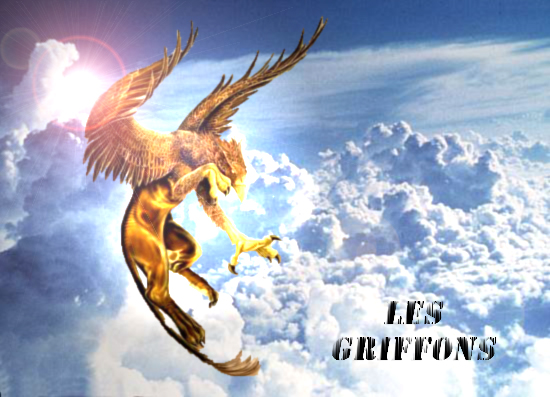 Les Griffons Index du Forum