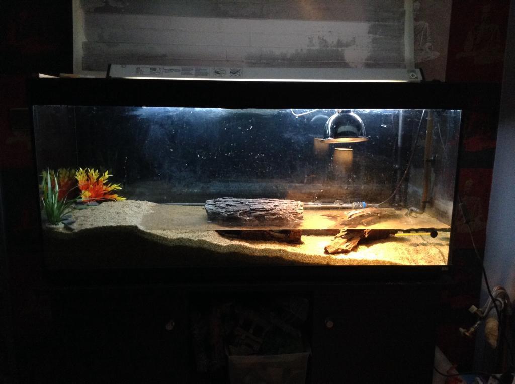 Paludarium tanks related keywords suggestions for Aquarium tortue aquatique