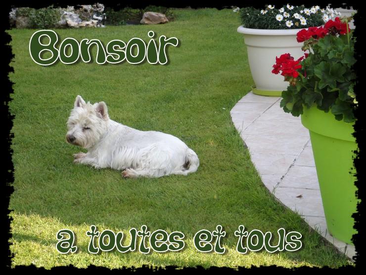 BONNE SOIREE DE DIMANCHE Bonsoir--45b50e5