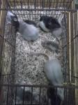 mes petits ratounets. Cam00338-4595961