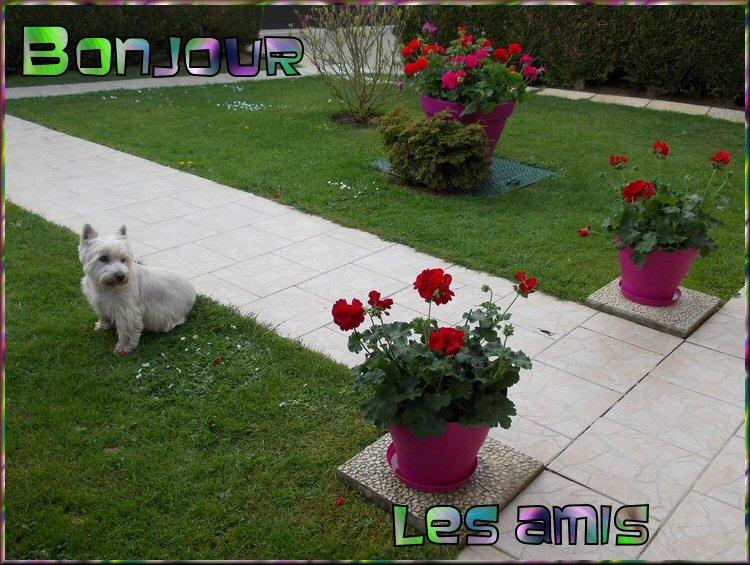 Bon MARDI 08/04 ! Bonjour-44f487d