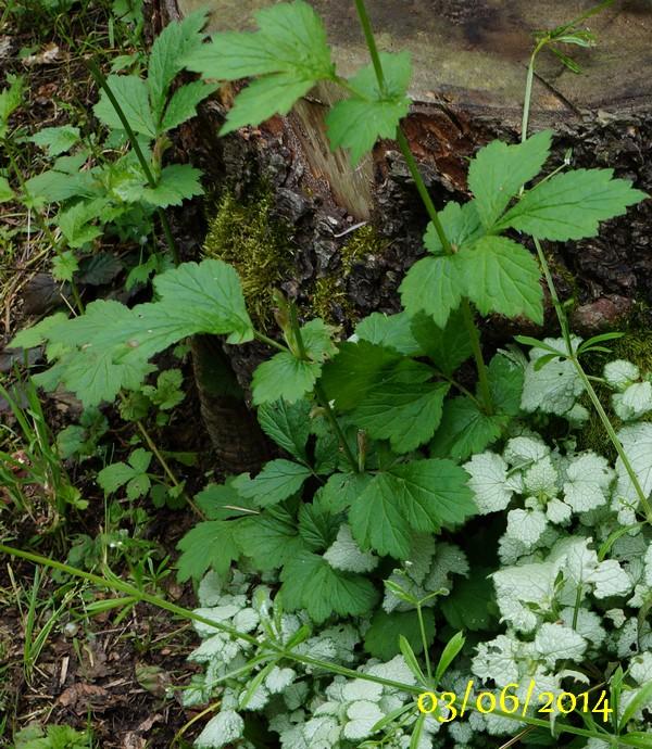 Quelle est cette plante invasive forum blog de jouy - Quelle plante dans une jarre ...