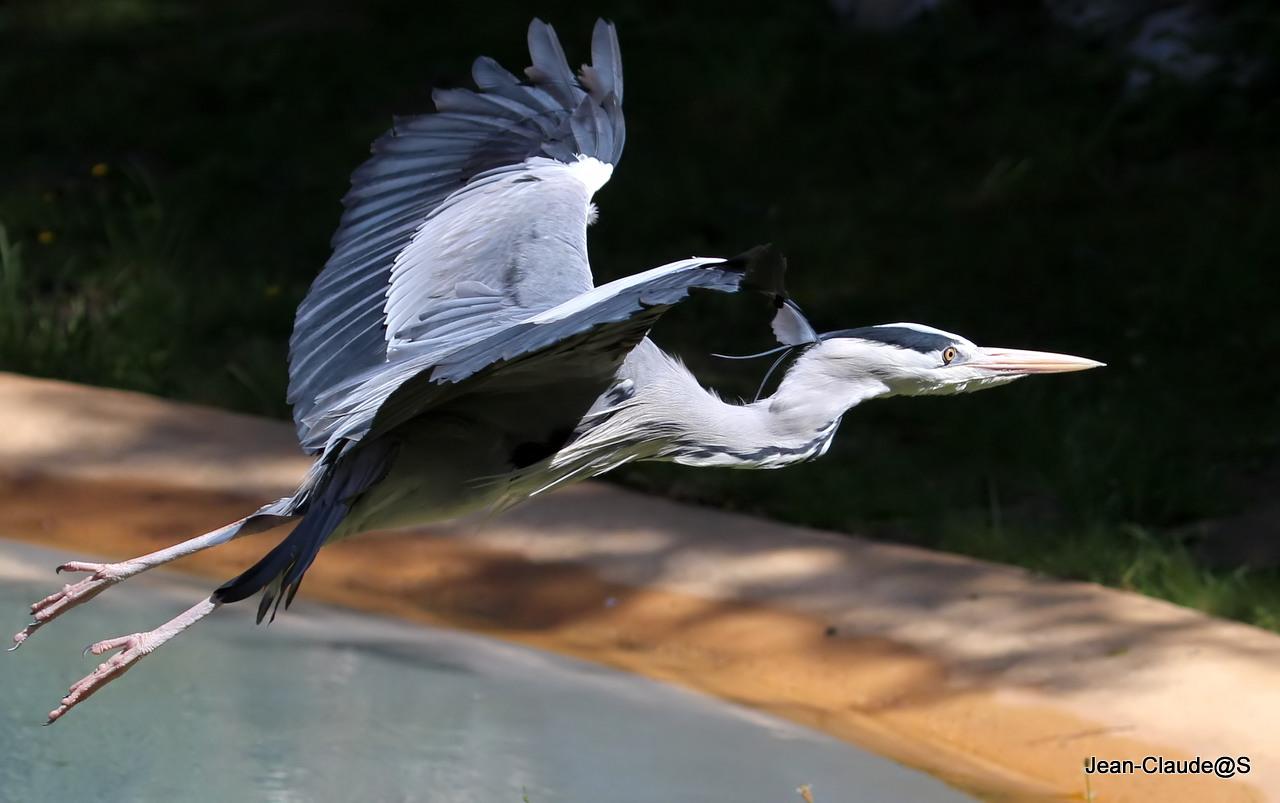 Les oiseaux de la Ria d'Etel Img_2394_filtered-473dba9