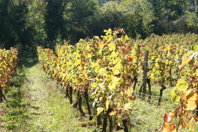 X 2015 DORDOGNE (24) octobre Dordogne et Caillac (près de Cahors) 3a-4d2581b
