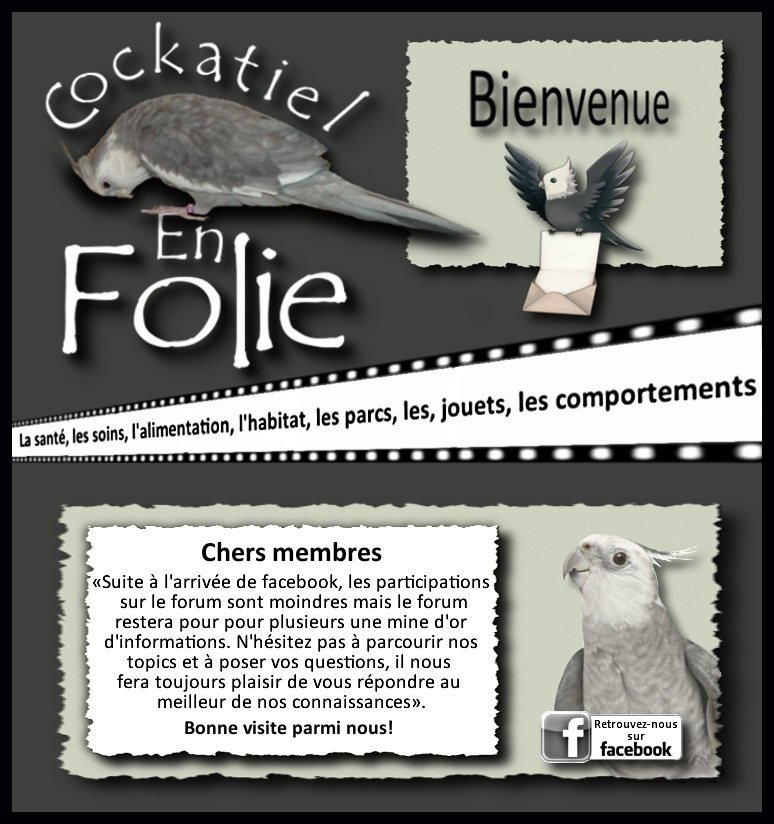 Cockatiel en Folie Index du Forum