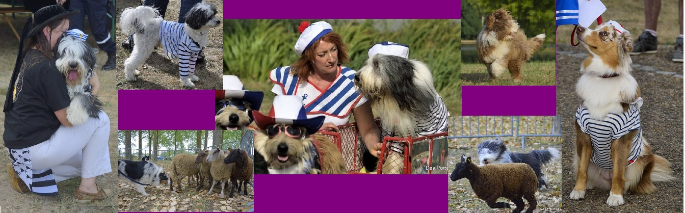 les Farfelus poilus et Fan Club du Bearded Collie Forum Index