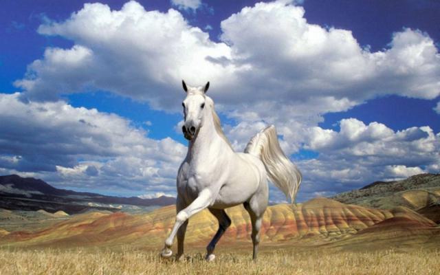 je trouve que les femmes de la damoiselle de la paix cheval a vendre pas cher ou a donner
