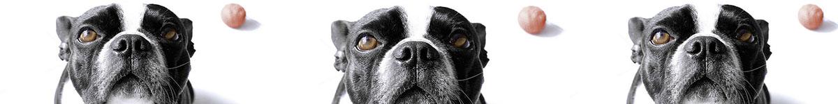 trouver-choisir-un-veterinaire Index du Forum