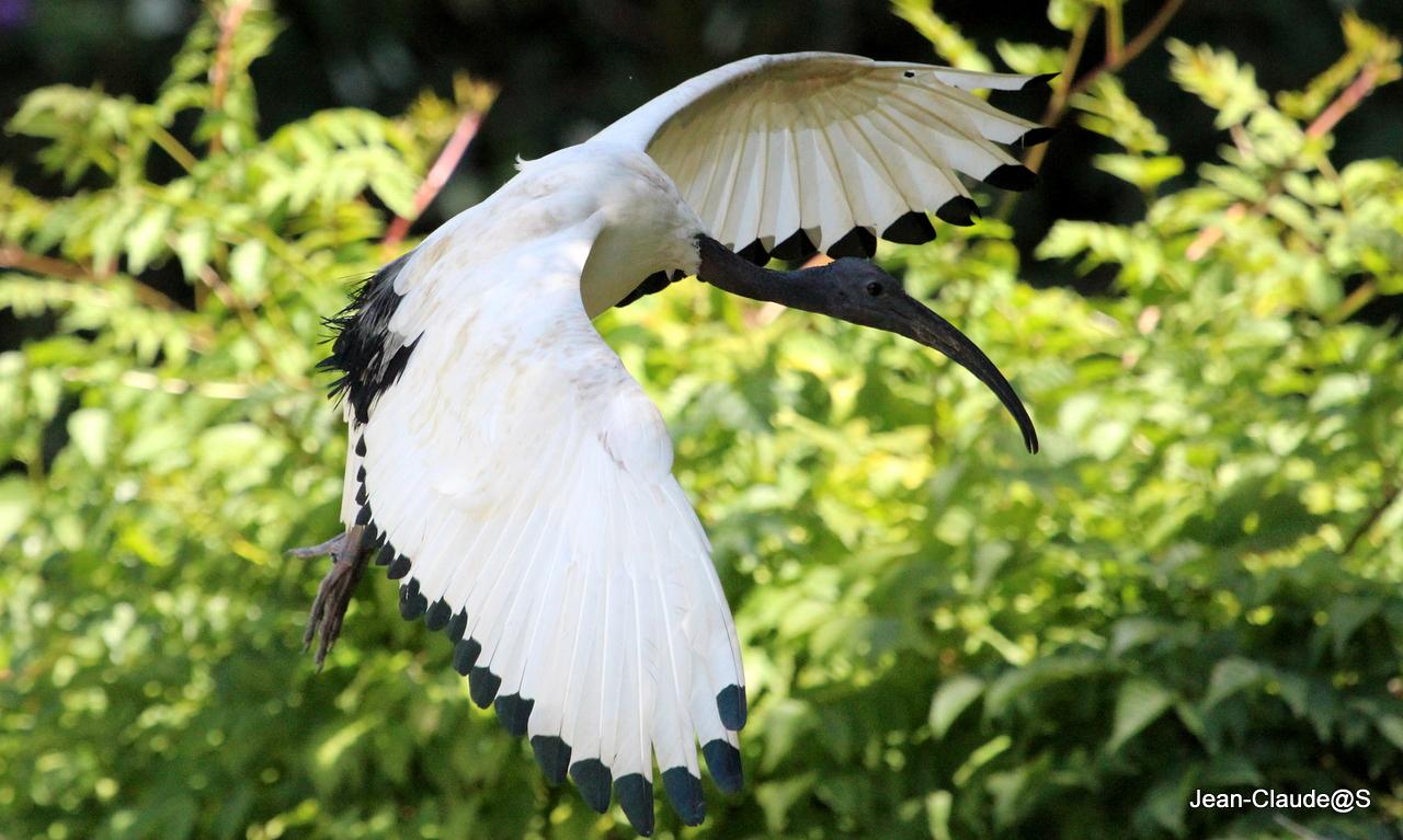 Les oiseaux de la Ria d'Etel Img_2405-473db7b