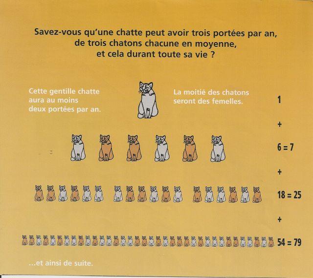 Association du chat libre pourquoi faire st riliser une - Combien de portee par an pour un chat ...