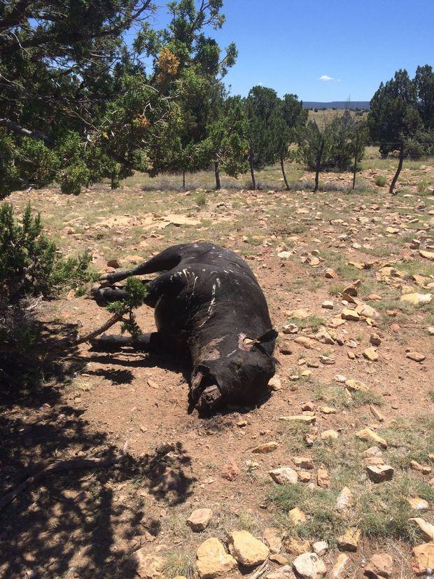 Les tueries de Flying M Ranch. Mutes-2016-4ef4c4e