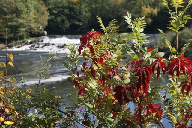 X 2015 DORDOGNE (24) octobre Dordogne et Caillac (près de Cahors) Va1-021-4d28374