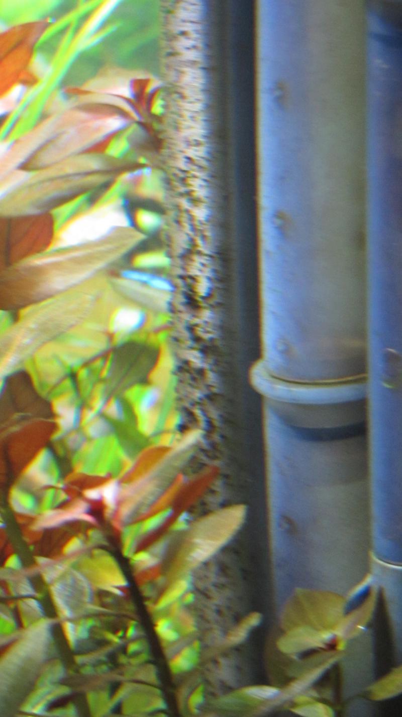 SOS ... carence en fer, dosage du fer, et consommation du fer ... SOS Img_4919-4c2e8dd