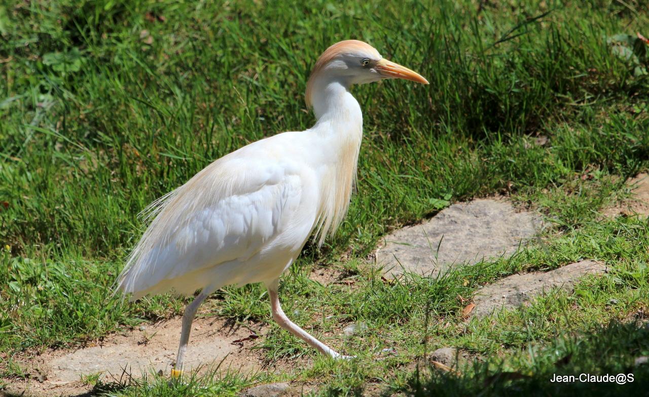 Les oiseaux de la Ria d'Etel Img_2399-473db8c