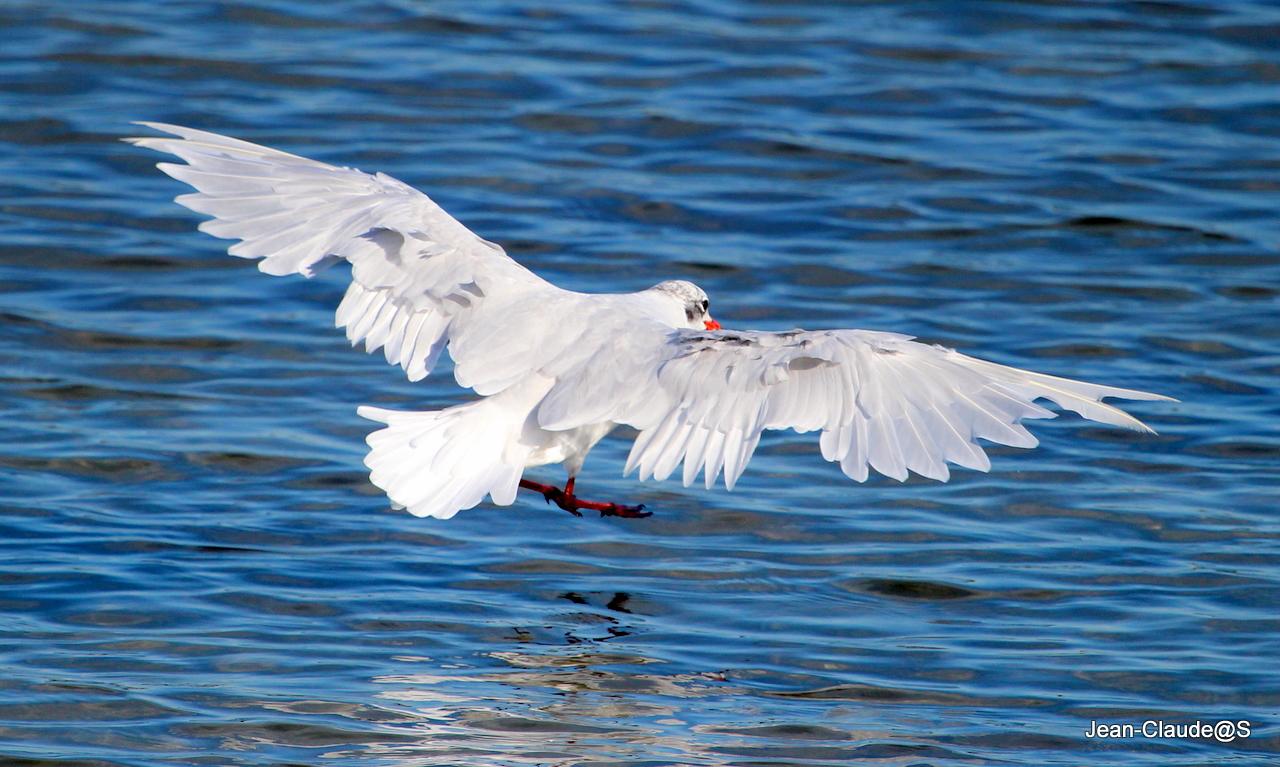 Les oiseaux de la Ria d'Etel Img_2208-4739861