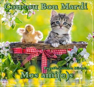 Bonjour / Bonsoir d'Octobre  - Page 2 Mardi_065-53366ee