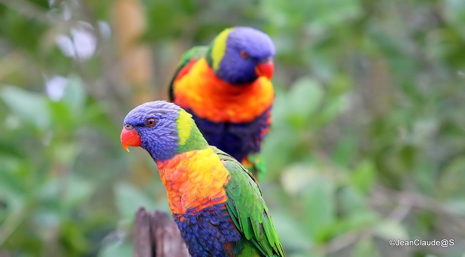 Zoo la Flèche Img_4045_filtered-5300eea