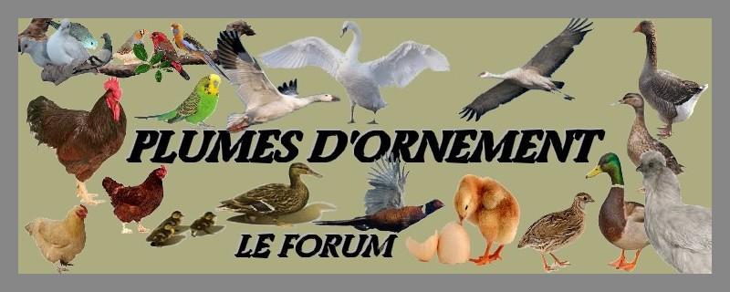 Forum Plumes D'ornement  Forum Index