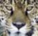 E - Jaguars : Ajoutez votre logo 88x31 en haut du forum pendant 1 an.