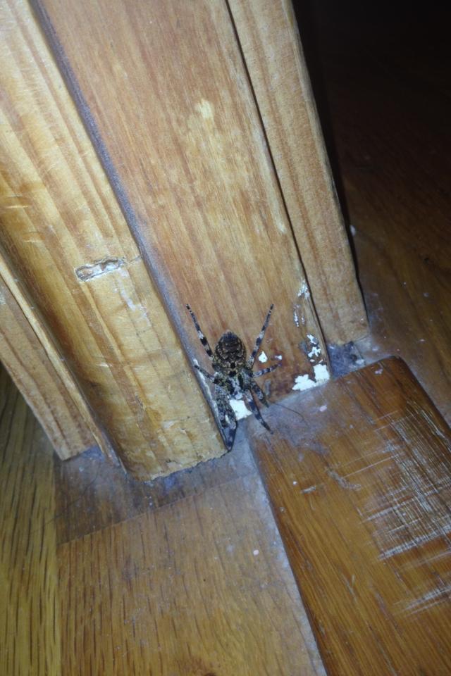 Localisation perpignan - Une araignee dans la salle de bain ...