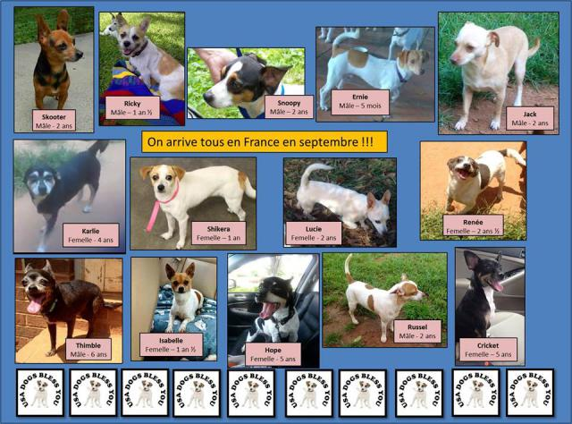 URGENCE - 14 chiens provenance USA - URGENCE Chiens-usa-475d9c2