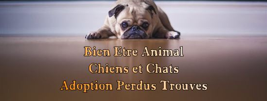 Bien Etre Animal  Chiens&chats Index du Forum