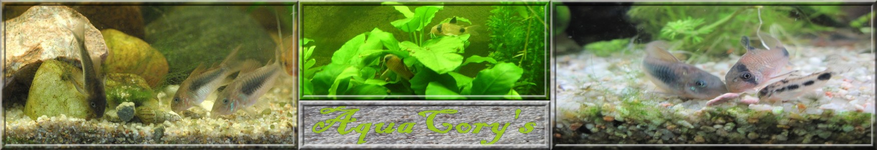 AquaCory's Index du Forum