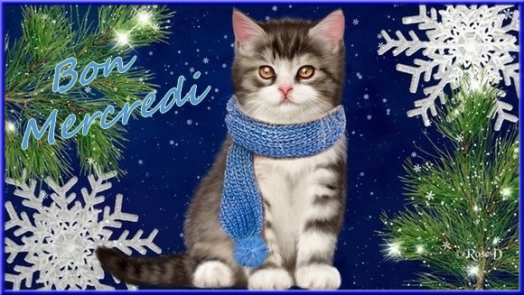 Les bonjour et bonne nuit du  1er janvier 2019 AU 1er Janvier 2020   - Page 2 Chathiv-5597c4f