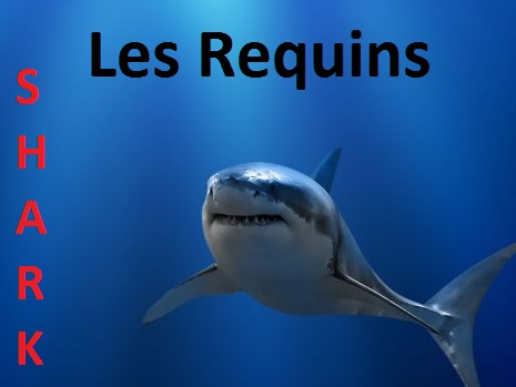 les requins Forum Index