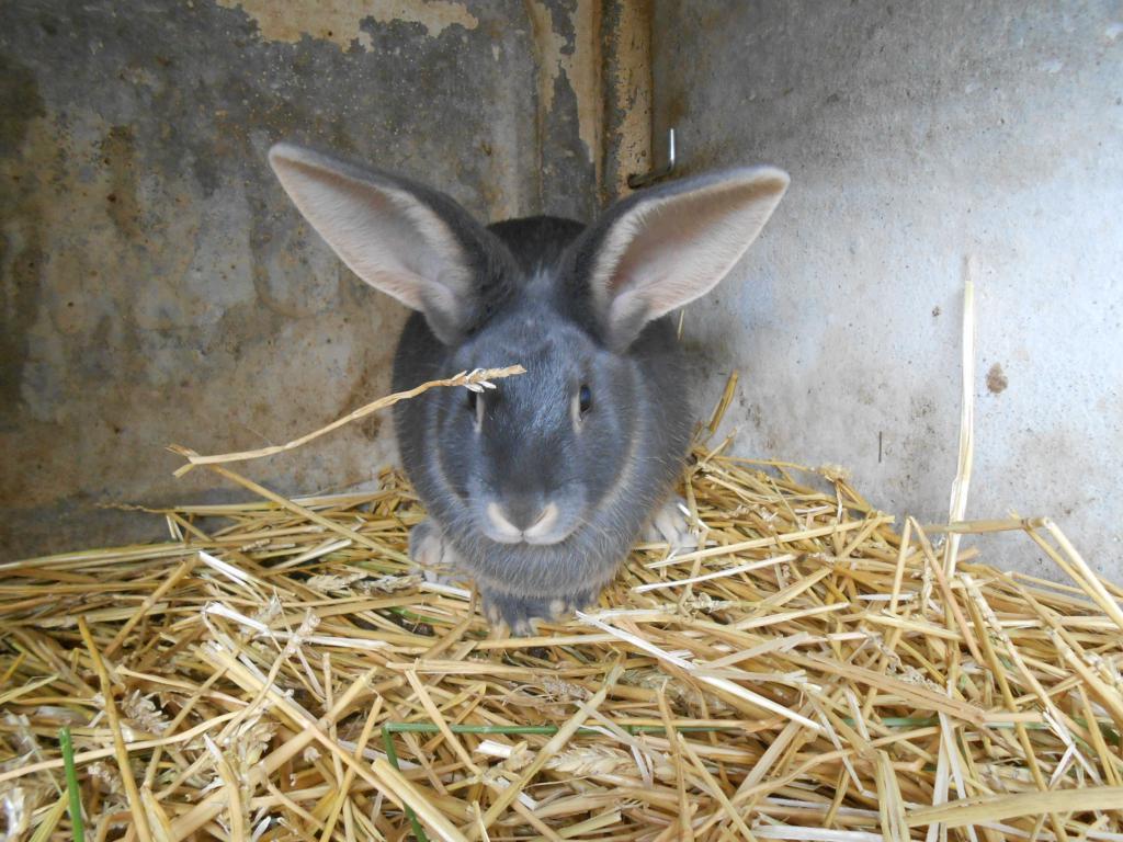 Une m nagerie dans mon jardin le lapin ch vre - 4 images 1 mot poussin lapin ...
