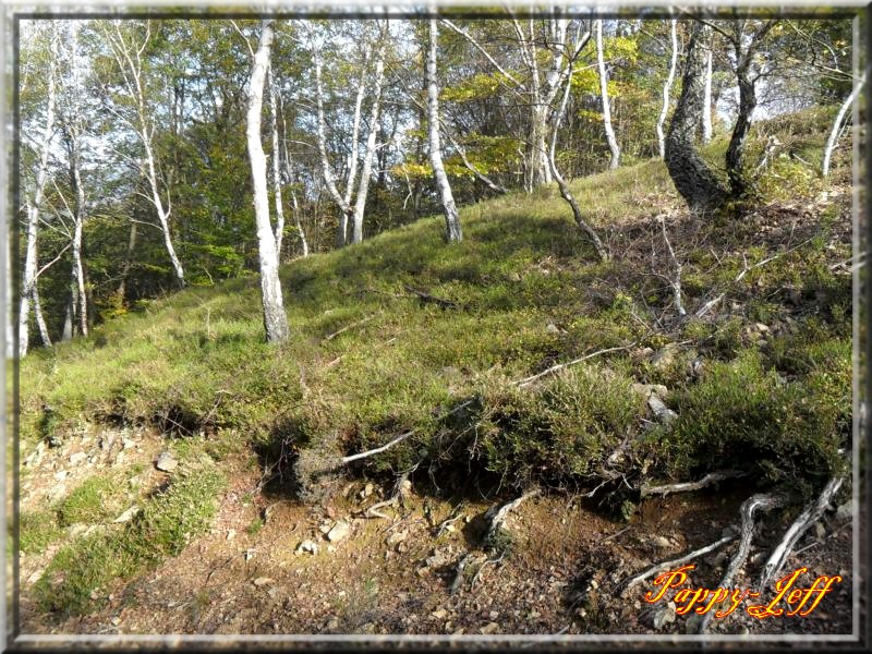 Petite rando dans les environs de Saint Amarin 119-485a8f1