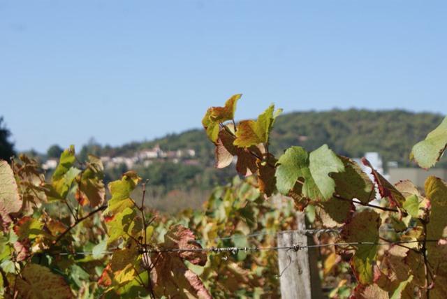 X 2015 DORDOGNE (24) octobre Dordogne et Caillac (près de Cahors) 2a-4d2580d