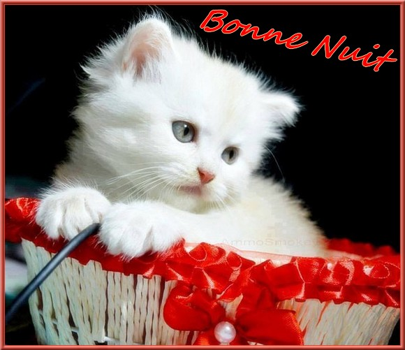 Les bonjour et bonne nuit du  1er janvier 2019 AU 1er Janvier 2020   - Page 5 Chatton-5585639