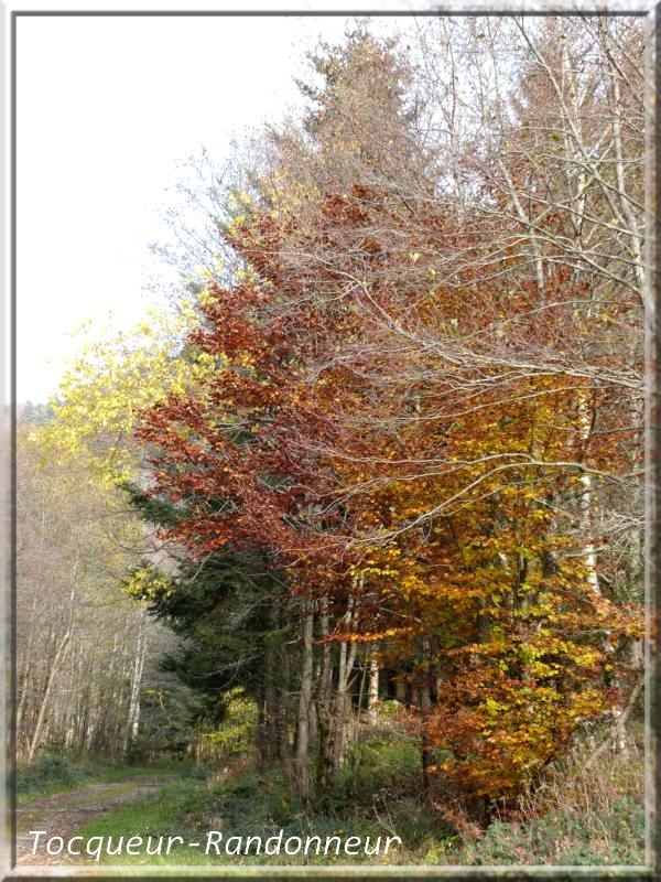 Couleurs d'automne Couleur-d-automne-113-489c795