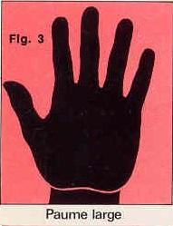 La forme générale de vos mains Paume-large-figure-3-4c0684a
