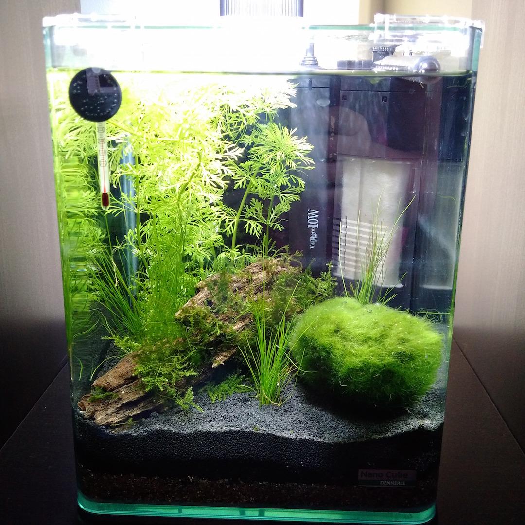 betta fan belgique site belge des passionn s de betta et de l 39 aquariophilie mon premier. Black Bedroom Furniture Sets. Home Design Ideas