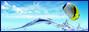 Tag bannière sur ©Féline Pub | Forum de pub, codage, graphisme, annuaire web  Kefkxjdppngv-549967e