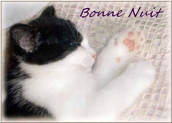 Bonne nuit du mois de Février 2019 - Page 2 Chatondo-54e7982