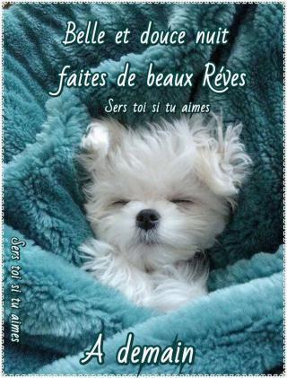 Bonjour / Bonsoir d'Octobre  - Page 2 880f1fd5175e98947...ttweiler-532f503