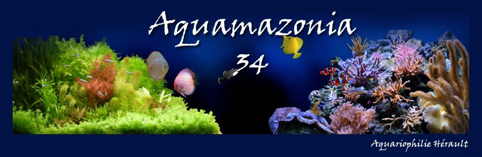 aquamazonia34