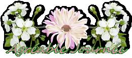 Bonjour du mois d'Avril 2019  - Page 4 Pngjourn-56003a4