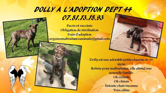 DOLLY - race indéterminée bringée - 07/2014 - UMA Dolly-4b38d4d