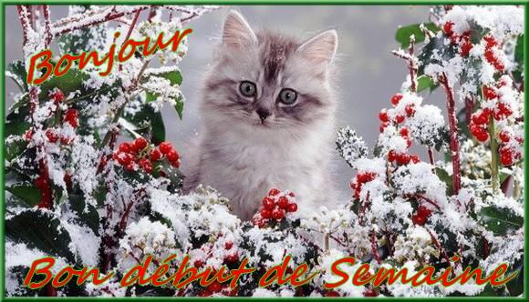 Les bonjour et bonne nuit du  1er janvier 2019 AU 1er Janvier 2020   - Page 5 Chatenei-55ad289