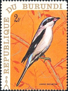 50 39 s pour toujours oiseaux birds par lettre alphab tique noms en latin lettre l 1 re partie. Black Bedroom Furniture Sets. Home Design Ideas
